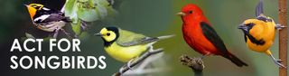Act-for-songbirds-header