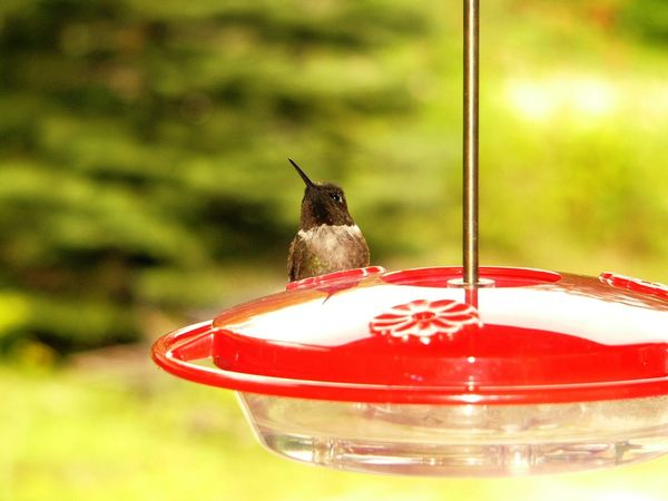 Should You Group Or Separate Your Hummingbird Feeders The Zen