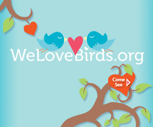 WeLoveBirds-300x250
