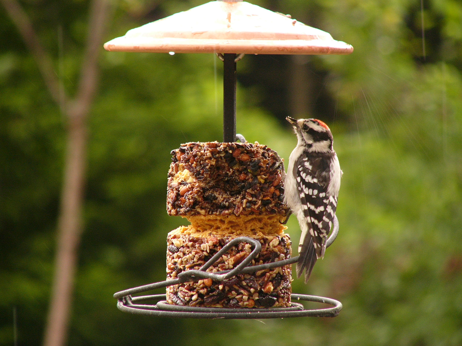 image feeders wild bird large advanced appealing for pole system amazon feeder birds unlimited