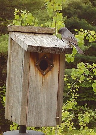 Dark eyed Junco on box WSBC4518