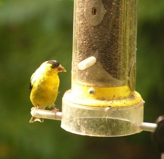 Old finch feeder