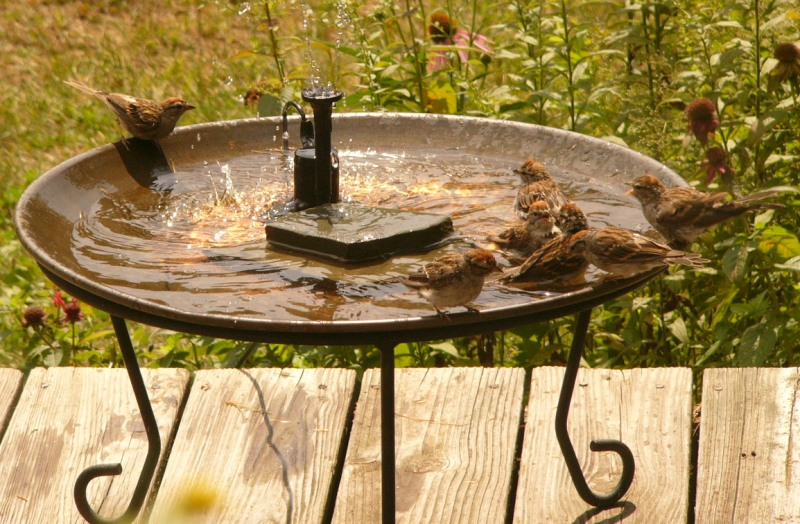 It\'s Hot Outside! Time to Provide Water for Birds! - The Zen Birdfeeder