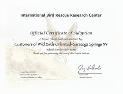 Pelican Adoption certificate