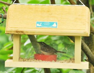 Wren in Bluebird feeder DSC_1581