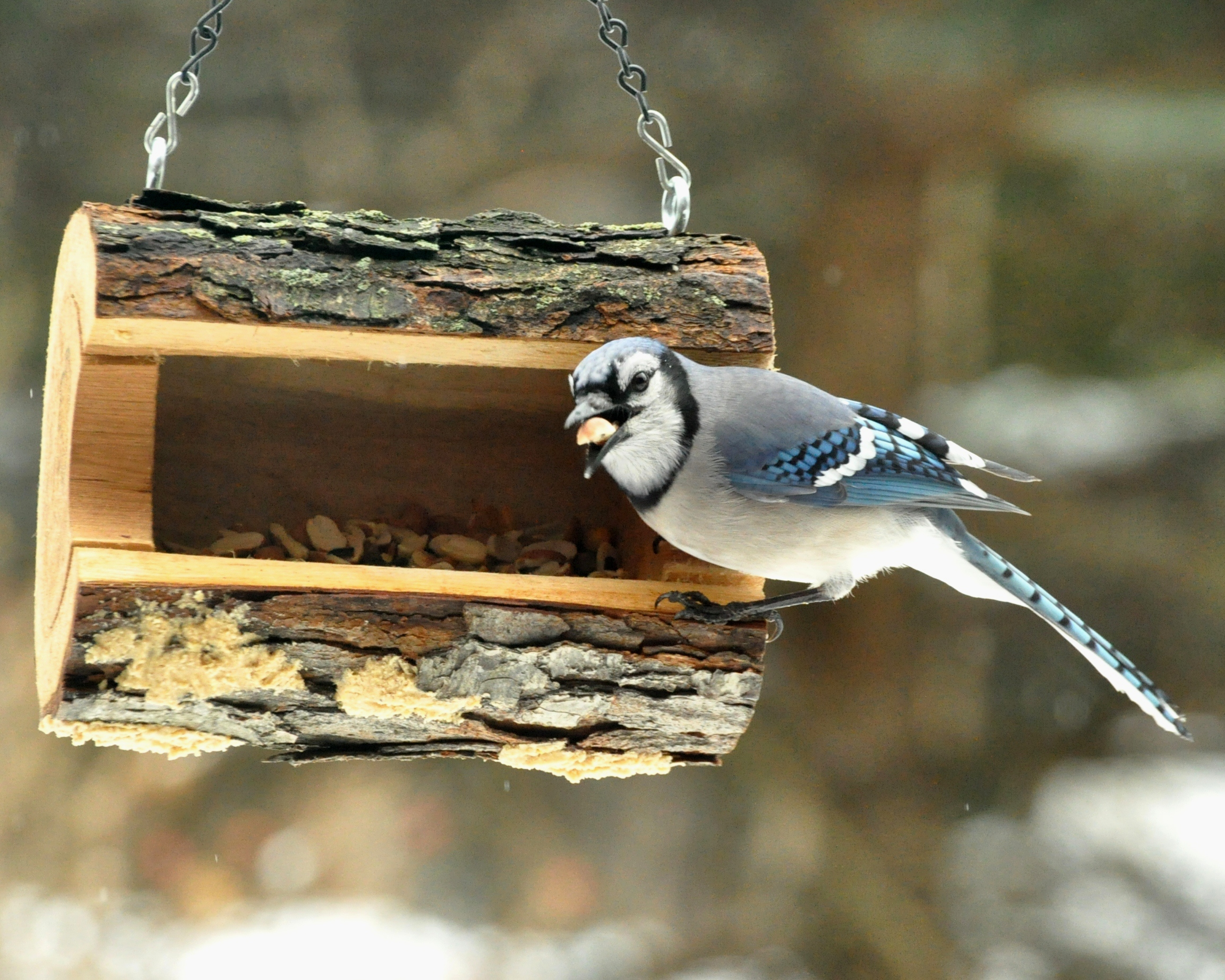 feeder awesome full unique blue jay at image bird feeders for