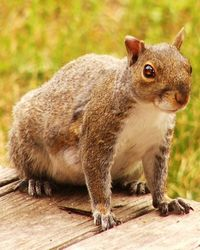 Satanic squirrel cropped portrait