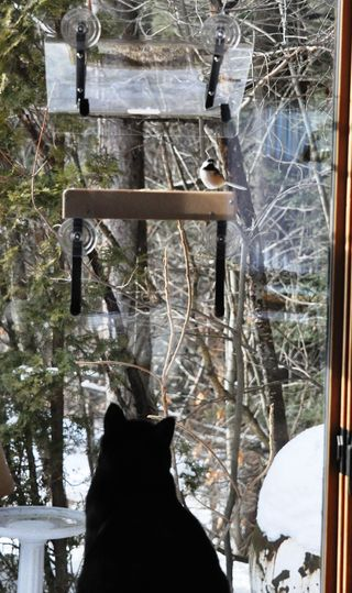Lizzie at window feeder DSC_2808