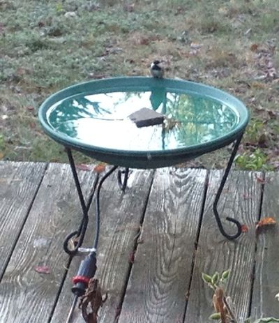 Bird at bath 838am