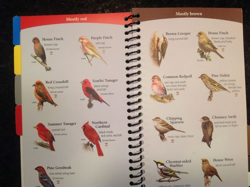 Birds of Midwest page