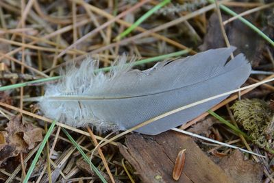 Feather DSC_3848