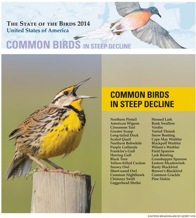2014 Common Birds in Steep Decline