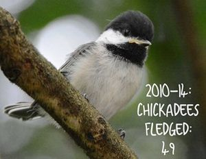 Chickadee graphic sm