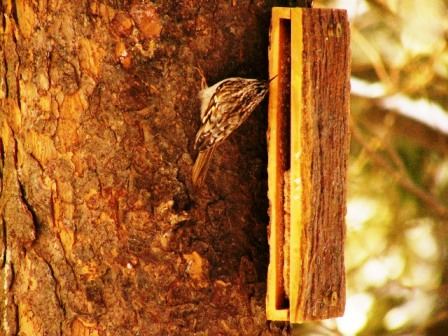 Sandwich_creeper3